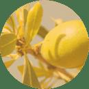 Botanical Beauty - Organic argania
